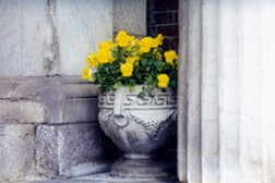 Photo of yellow flowers with vase