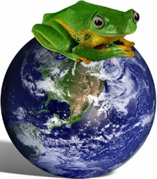 Photo of a frog on top of the world